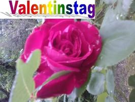 Valentinstag  Fest der Liebe